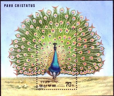 Peacock of DPR Korea on stamps.