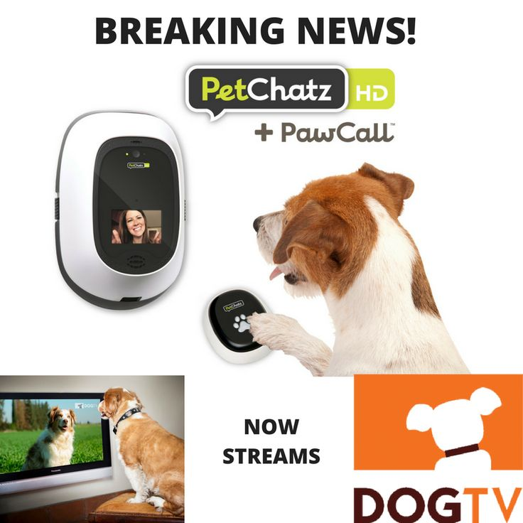 PetChatz now streams DOGTV.  The only dog camera in the world that can stream video content designed for dogs to help with anxiety and boredom. Treat your dog with at home dog daycare.