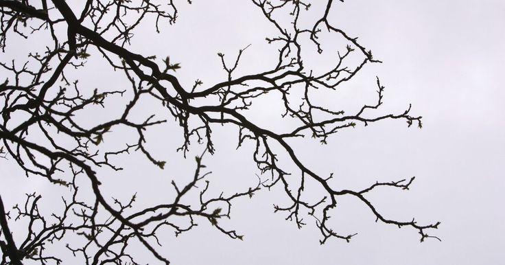 Cómo pintar una rama seca de un árbol para usar en el interior