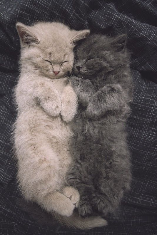 Two cute black and brown cats sleeping together......click on picture for more