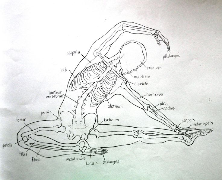 yoga anatomy skeleton a graphite sketch from my figure drawing class - Yoga Anatomy Coloring Book