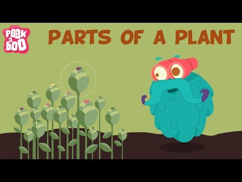 Parts Of A Plant | The Dr. Binocs Show | Learn Series For Kids