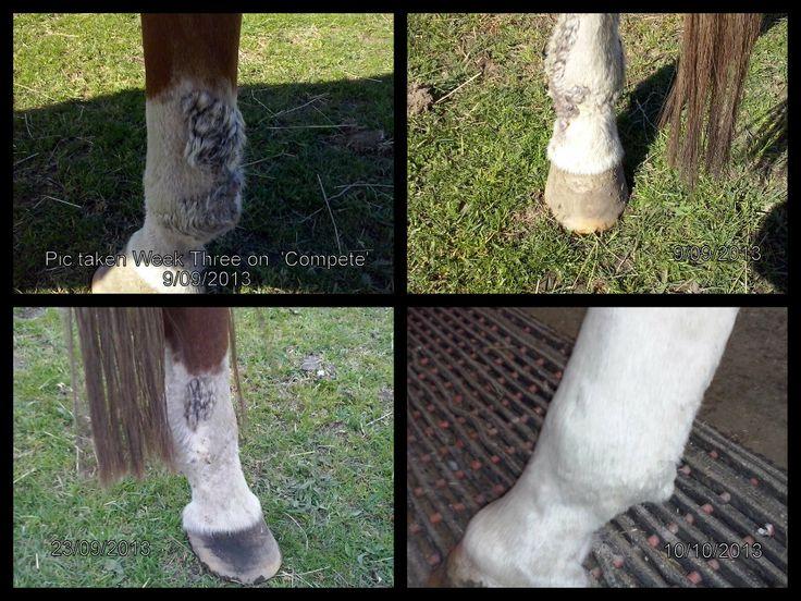 Mud Fever gone!