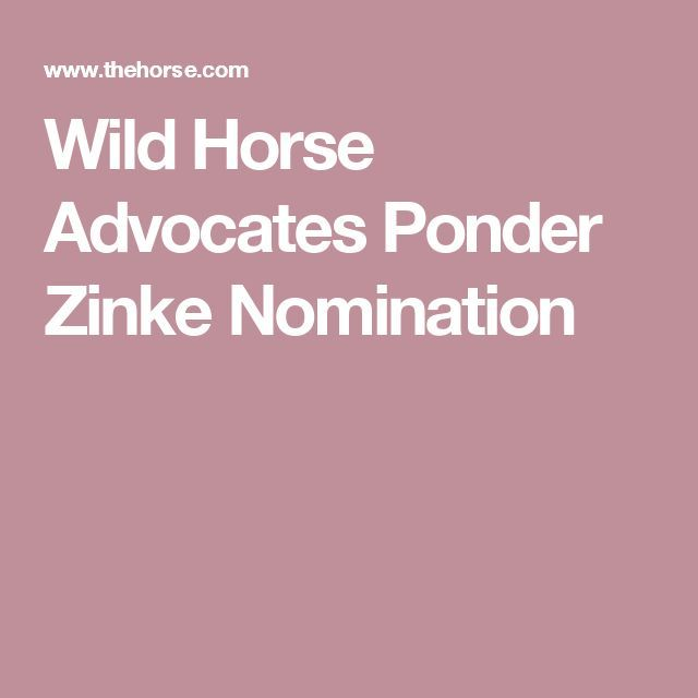 From TheHorse.com In the wake of President-Elect Donald Trump's Dec. 15 nomination of U.S. House Representative Ryan Zinke (R-MT) as Secretary of the Interior, some wild horse advocates are c…