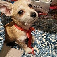 Rosemead, California - Terrier (Unknown Type, Medium). Meet Wally, a for adoption. https://www.adoptapet.com/pet/20135383-rosemead-california-terrier-unknown-type-medium-mix