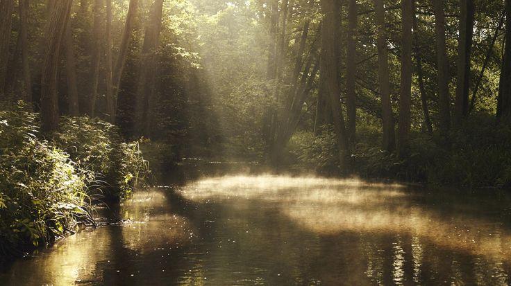 Der Küstrinchenbach ist ein Bach, der durch einen fast urwaldartig anmutenden Forst verläuft und aus verschiedensten Gründen nur ca. 2 Wochen im Jahr befahrbar ist. Foto: Jim Gramming #Fotografie #Deutschland #Dschungel