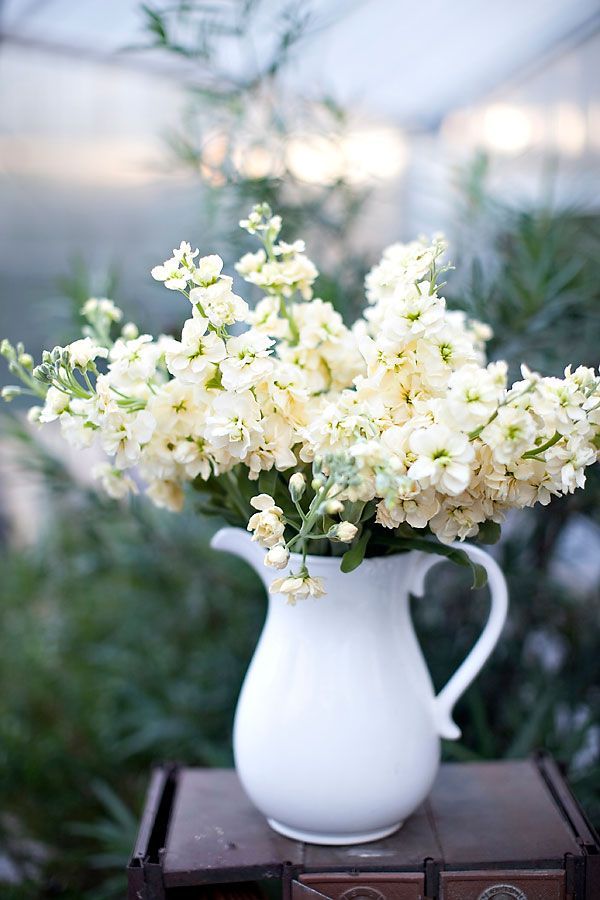 a pitcher of stocks, oh the fragrance!: Ideas, White Flowers, Wedding, Flower Arrangements, Beautiful Flowers, Stock Flower, Pretty Flower, Floral, White Pitcher