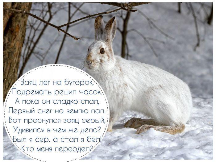 Зимний стих о зайце