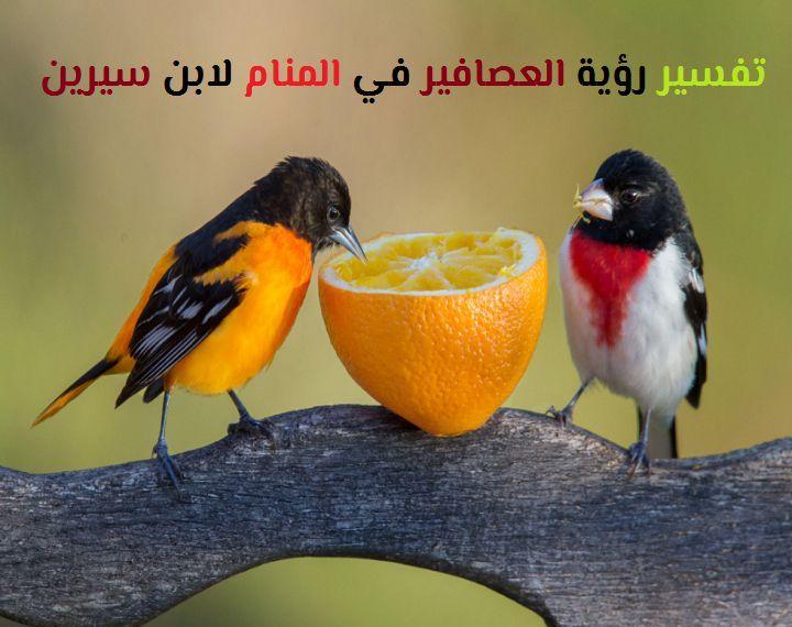تفسير رؤية العصافير أو العصفور في المنام لابن سيرين موقع مصري Backyard Birds Pet Birds Great Backyard Bird Count