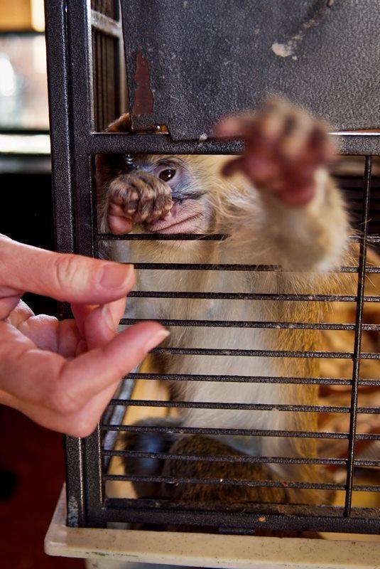 Speziesismus ist eine Form der Diskriminierung von Individuen anderer Spezies.    Alle Tiere, menschlich und nichtmenschlich, sind fühlende Wesen mit der Fähigkeit Freude, Schmerz, Glück und Angst zu empfinden. Daraus ergeben sich die gleichen Interessen, keine Schmerzen und Leid fühlen zu müssen. Diese gleichen Interessen verdienen gleiche Berücksichtigung.          Foto: Jonas Amadeo Lucas - The Animal Day