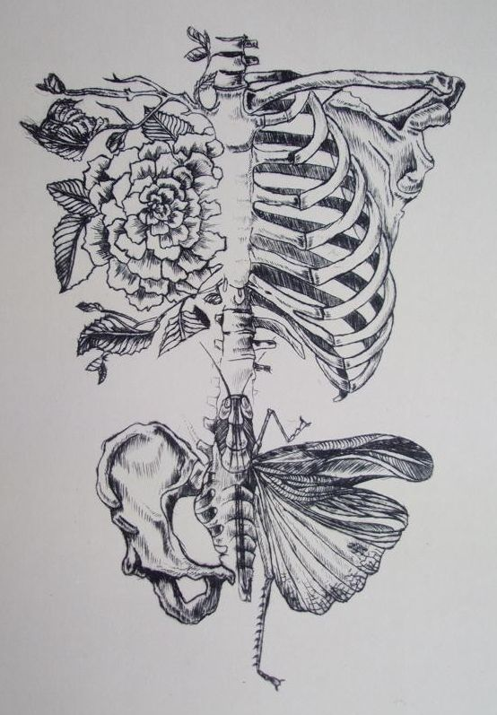 Soft Anatomy by Rebecca Ladds - I loove this! As a Physio student I have a special place in my heart for anatomy, but this is still soft and girly. And I like the juxtaposition