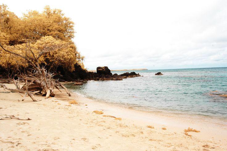 batu putih,.karimunjava island<jepara,Indonesia