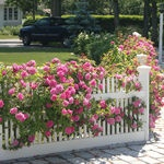 Roses, Lillies, Hydrangeas, Rhodies, Azaleas. Add some Peonies and Irises and this is very close to my dream for the front yard.: Gardens Ideas, Houses Front, Climbing Rose, Picket Fence, Houses Ideas, Front Yard,  Pale, Romantic Rose, Flowers Fence