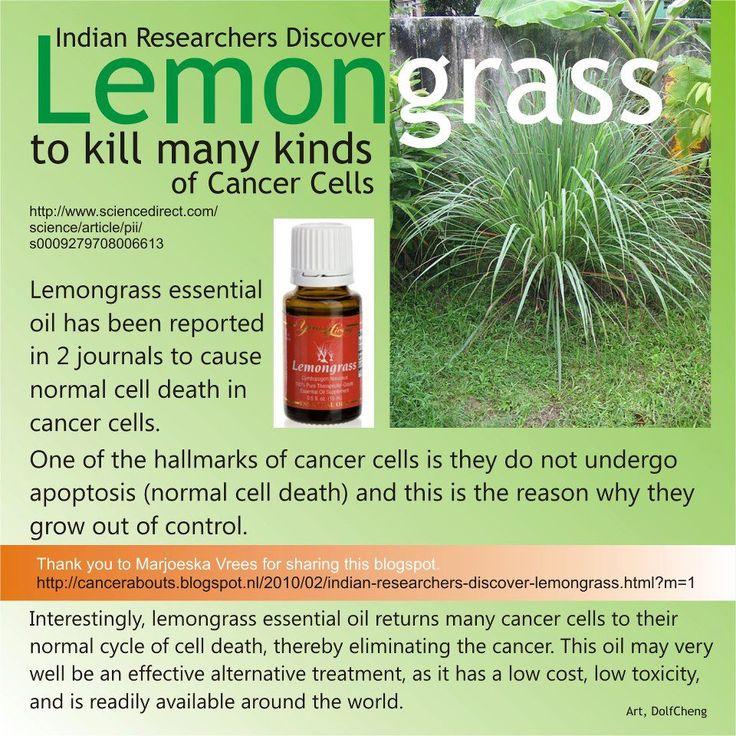 lemongrass essential oil - photo #13
