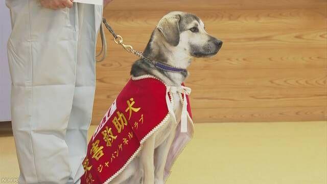 雑種の保護犬 難関の 災害救助犬 試験に一発合格 徳島 Twitter速報ニュース 2019 12 26 救助犬 災害救助 雑種