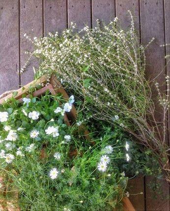 My garden.   http://www.gillianbellcake.com.au/  #gathering #homegrown #flowers #organic #flora #edible #brisbanewedding #cake #gillianbell
