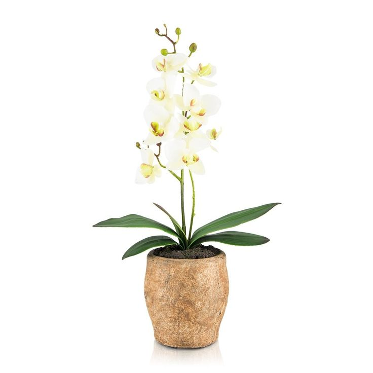 Potted Decor Orchid