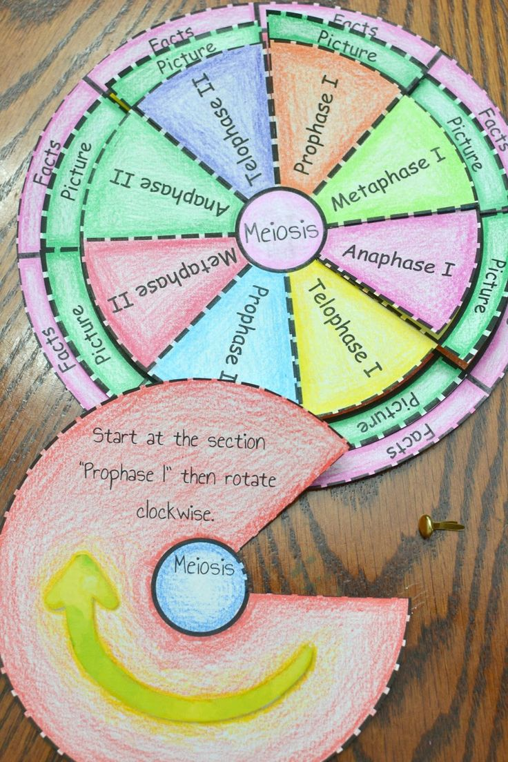 Math in Demand Mitosis Meiosis activity Cell cycle