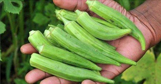 22 Los beneficios para la salud de la Okra o Quingombó