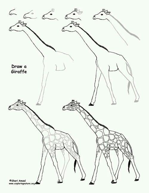 традиционной картинки жираф поэтапно он-то зряч, так