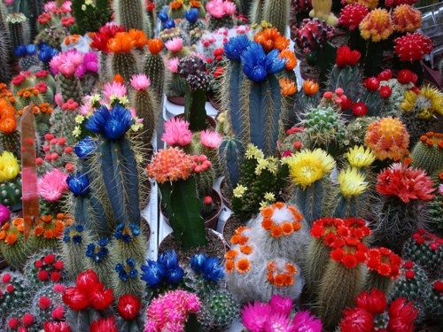 Who knew cactus (cactii?) could be so colorful!