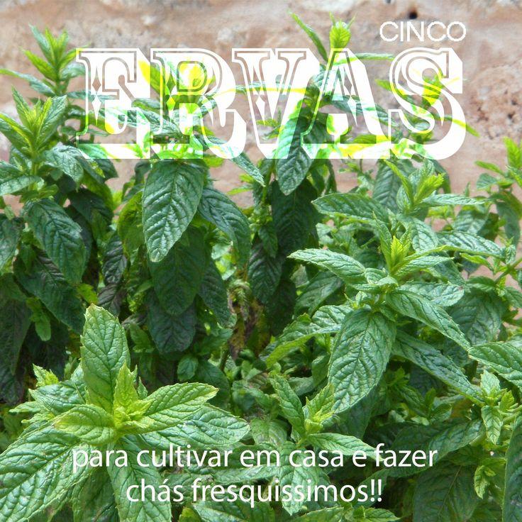 Aprenda a cultivar ervas para fazer chás fresquíssimos em casa