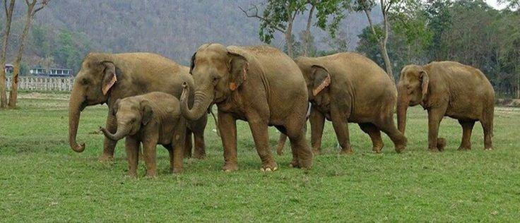 Nature S Miracle Babies Elephants