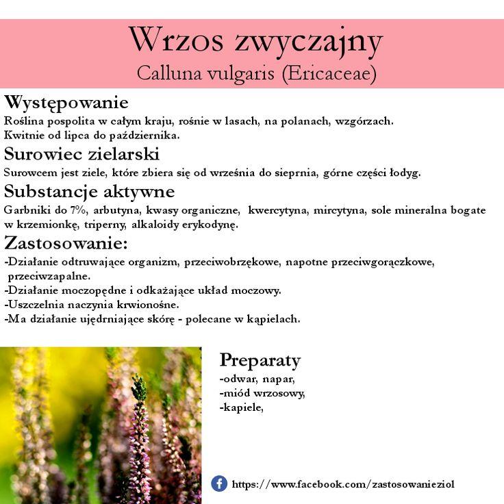 Zioła, Kwiaty i ich zastosowanie: Wrzos zwyczajny działanie przeciwzapalne, odkażające układ moczowy i nie tylko!
