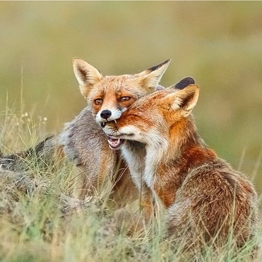 Photographer | Writer | Editor | Fox photos | Fine Art | I give expression to my 💚 for nature by writing and taking photos | Visit my shop for prints