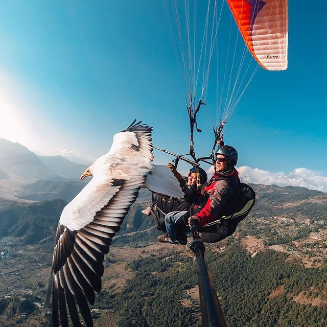 Photo of the Day! Scott Mason and Sofia Thapa of @Parahawking glide over Nepal with a beautiful bird of prey. They offer the unbelievable experience of flying alongside the animals and interacting with them in their own environment. Share your most unique travel moments with us by following the link in our profile. #GoPro #GoProTravel