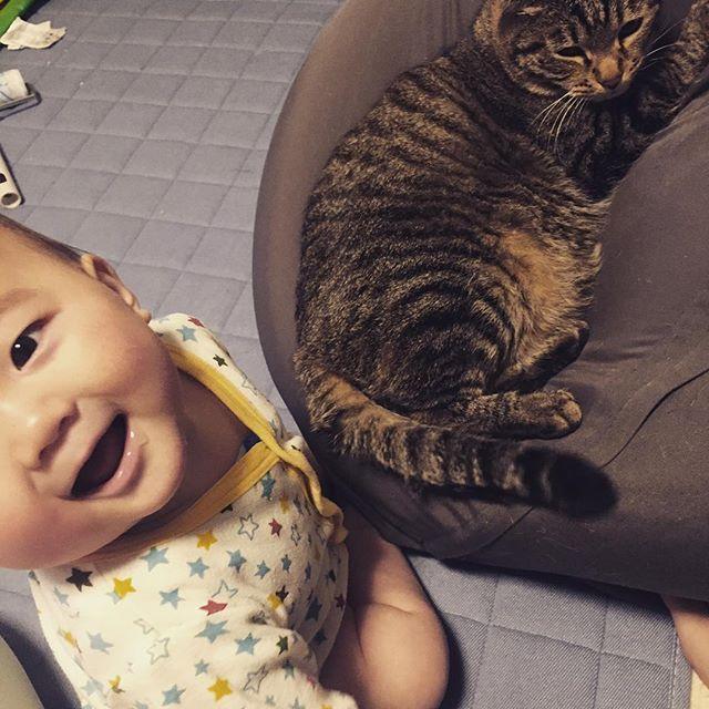 息子「しっぽうめー!」みたいな顔 母・猫(えぇぇ…) ◇ 気づくと猫にちょっかい出してて 猫に申し訳ないから ちょっと良いおやつあげよう🐱💓 ◇  #ねこ #ねこ部 #赤ちゃんと猫 #しっぽ #舐める #息子 #7ヶ月 #むっとしてる #愛猫 #我慢強い