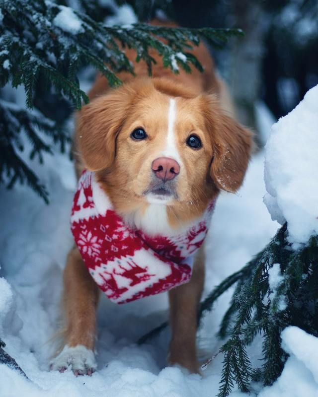 The Cutest Puppy Of The Day 19 Pics Puppies Baby Dogs Cute Puppies