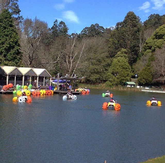 In the heart of Emerald in the Dandenong Ranges and as one of the destination points for the iconic Puffing Billy, the park offers a range of activities inc