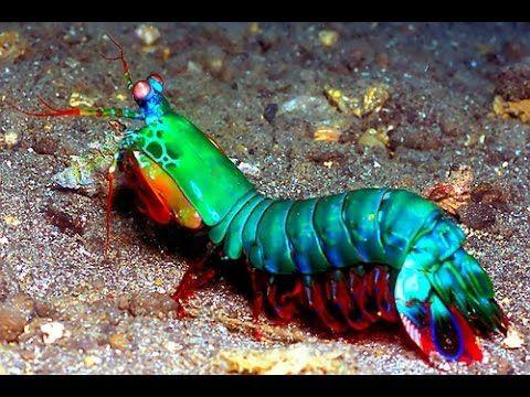 Los mejores ojos? los del camaron mantis.