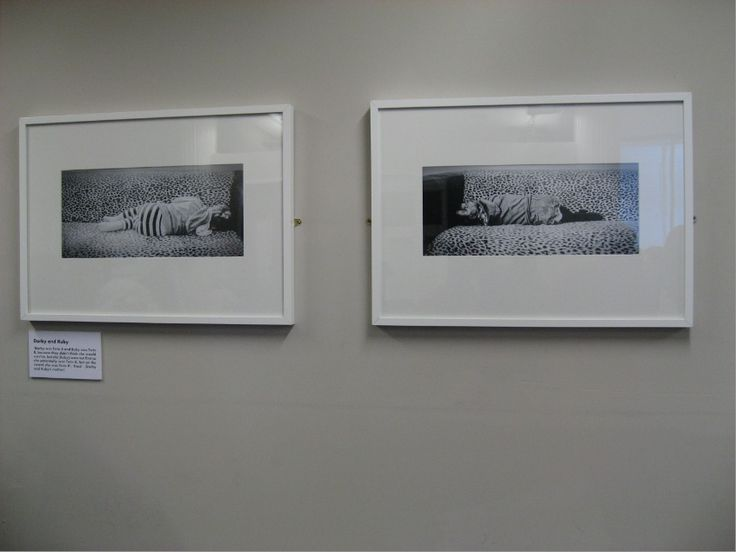 SIX PERCENT BOOK EXHIBITION. Photo Gallery of the Six Percent photos.