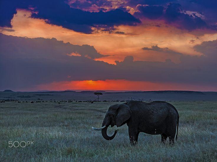 elephant sunset 11 by libor plo�ek photo 127614819