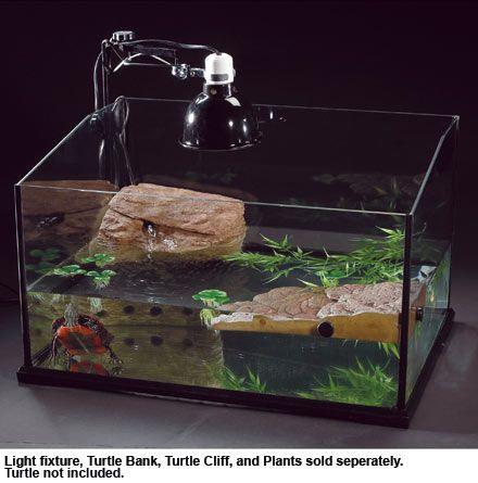 Small Aquatic Turtles As Pets