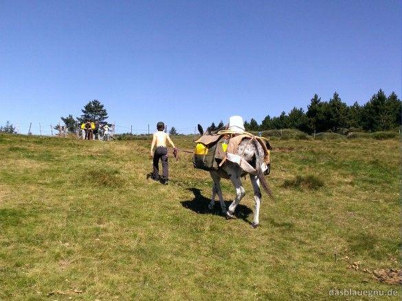 Eselwandern mit Kindern in den Cevennen. Erfahrungsbericht, die besten Adressen und  Tipps für Familien