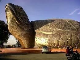 Image result for crazy animal homes