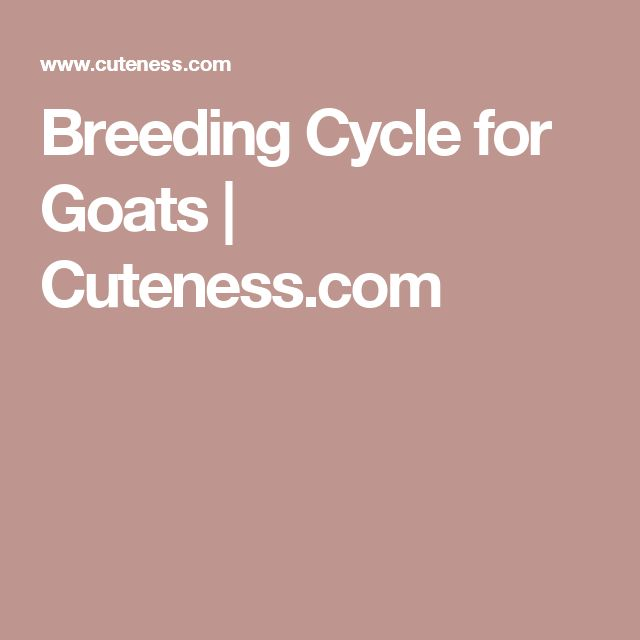 Breeding Cycle for Goats | Cuteness.com