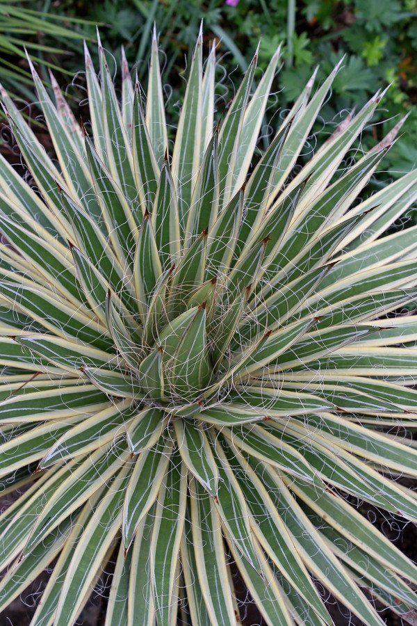plante exotique seiya