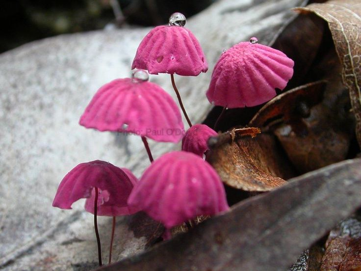 Toadstools in the Daintree Rainforest National Park, Australia