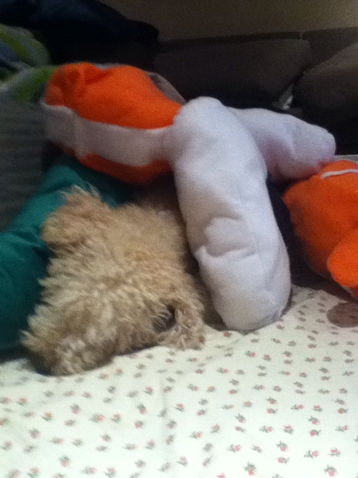All cozy in my pile of pillows.