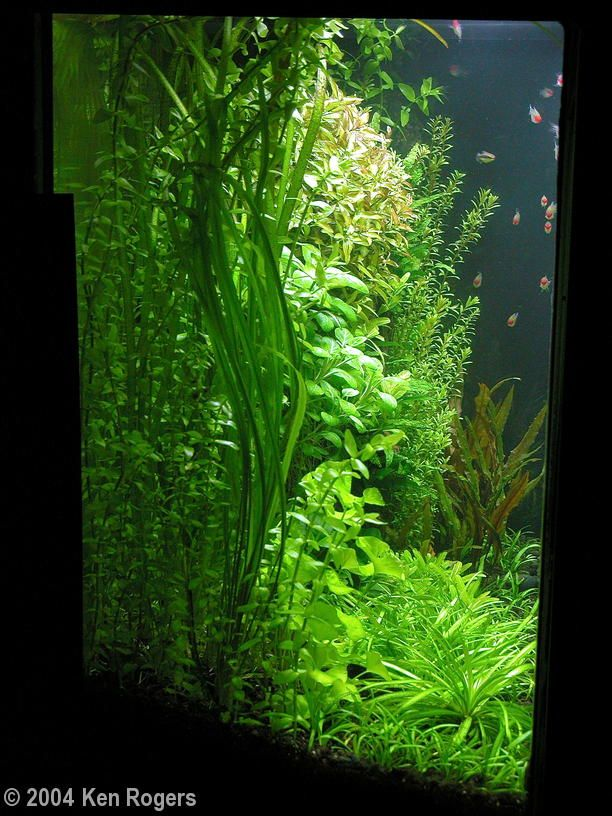 les 25 meilleures id es de la cat gorie aquascaping sur pinterest aquarium r servoirs de. Black Bedroom Furniture Sets. Home Design Ideas