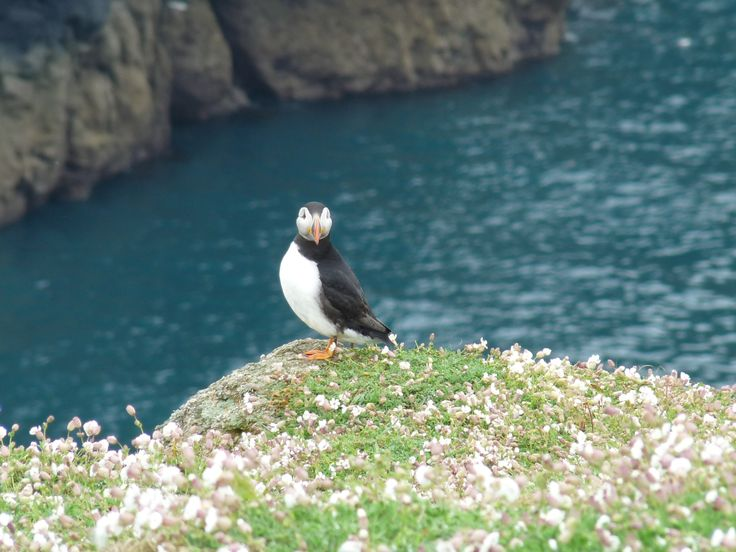 You walk right past their nests as you go round the island and they are not scared of humans