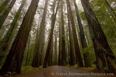 humboldt county caCalifornia Redwood, Buckets Lists, States Parks, Favorite Places, Northern California, Redwood Forests, National Parks, Redwood National, National Forests