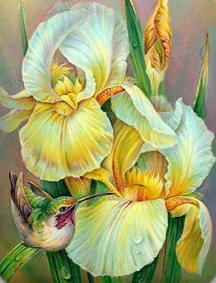 Iris and Hummingbird