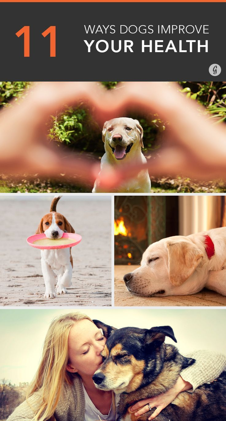 A furry friend could be just what the doctor ordered #puppylove #dogs #health