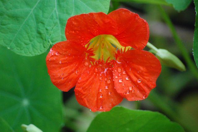 Sei fiori da seminare nell'orto per la lotta biologica