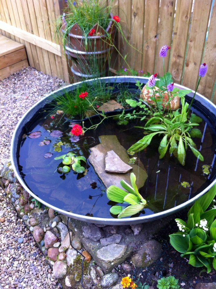 Koi Care Com Home Page Ponds Backyard Indoor Water Garden Backyard Water Feature